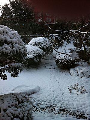 蘇山郷2011年大晦日の朝の庭
