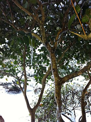 雪が溶けて再凍結